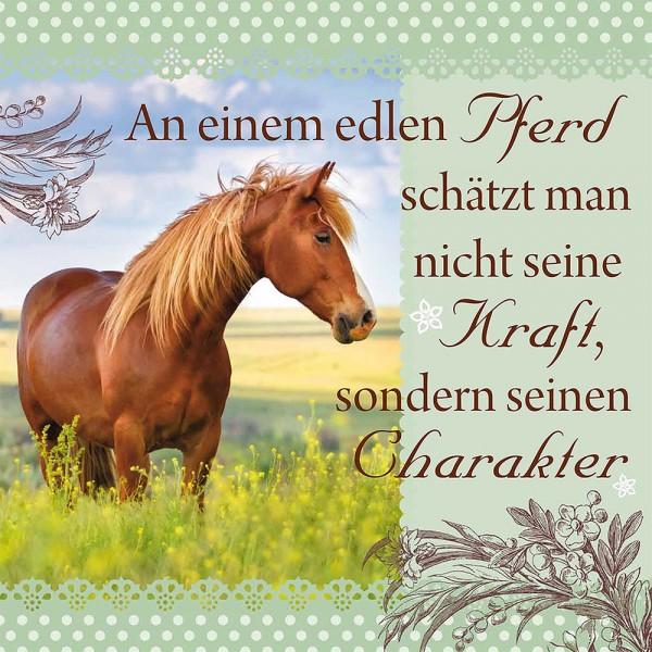 HH_31830036_An_einem_edlen_Pferd_1000x1000